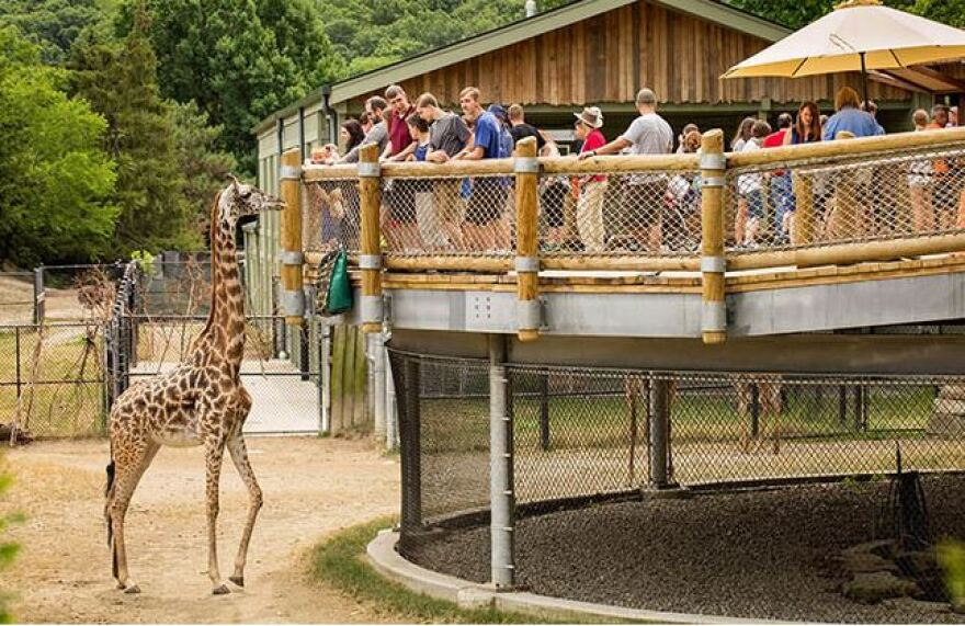 Photo of giraffe at Cleveland Metroparks Zoo