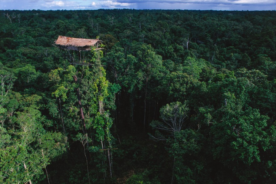 In Papua, Indonesia, many members of the Korowai people live in tree houses, which they say keep away mosquitoes and offered protection from historical enemies. This is the tallest treehouse Steinmetz observed — towering at 160 feet in height.