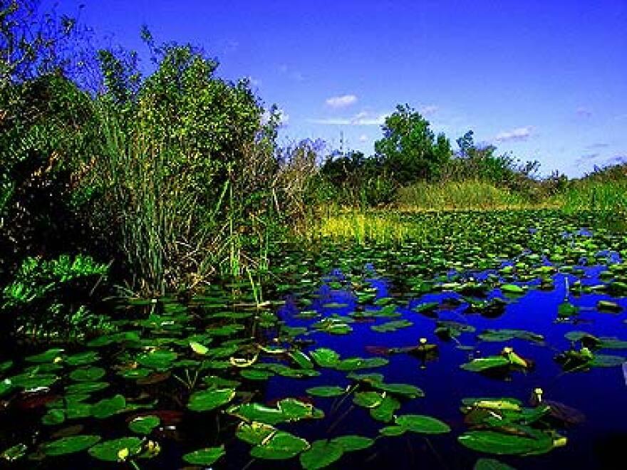 Everglades1.jpg
