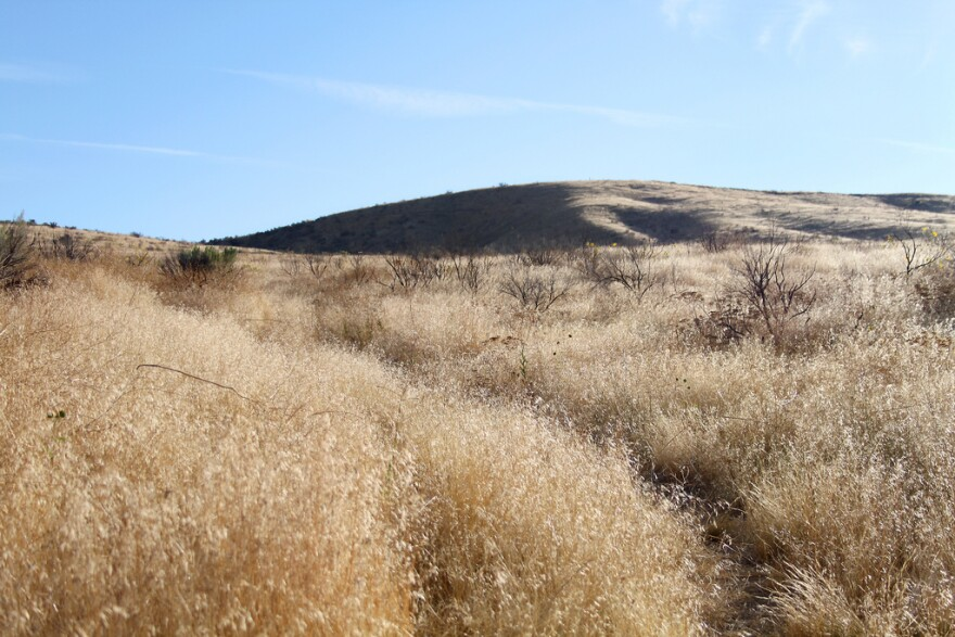 Dry cheatgrass covers rolling hills.