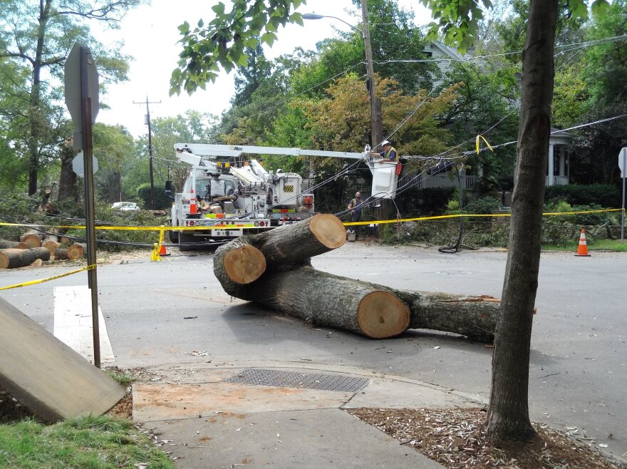 The remains of an old pin oak that toppled at Clement Avenue and Bay Street during tropical storm Michael.