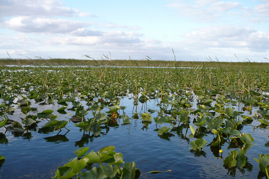 Donald Trump has vowed to restore the Florida Everglades as President.