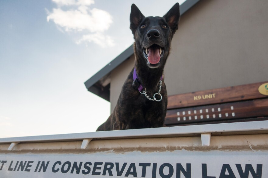 Since their debut in 2012, K-9 units have fast become an integral part of South Africa's counter-poaching operations, playing a role in 80 percent of poacher apprehensions.
