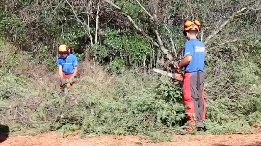 A Kupu Aina Corps work crew funded by CARES Act money uses chainsaws to clear invasive mangroves from the area around Pearl Harbor on the island of Oahu.
