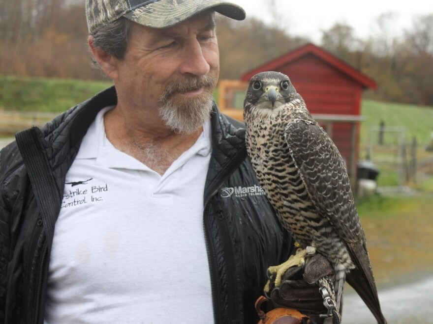 Brad Felger, founder and CEO of Airstrike Bird Control, has had a self-described love for everything with feathers, scales or tails since he was 12 years old.
