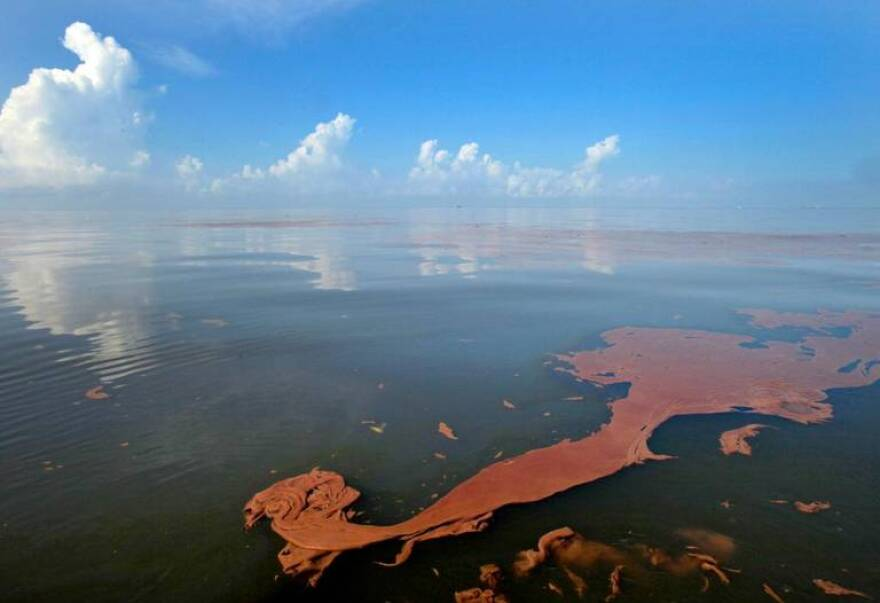 Oil floated in Barataria Bay off Louisiana, one of the hardest hit regions, more than two weeks after the BP macondo well exploded.