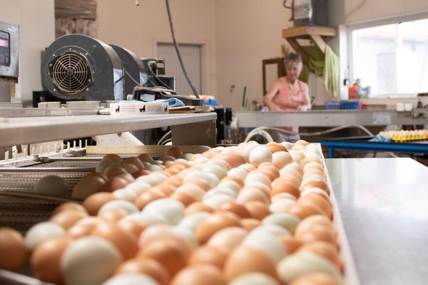 Julie at the Egg Washer.jpg