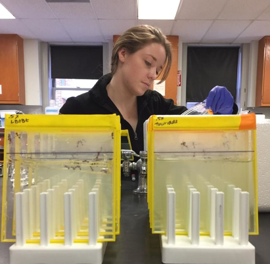 A student working in Victoria Brown-Kennerly's lab at Webster University.