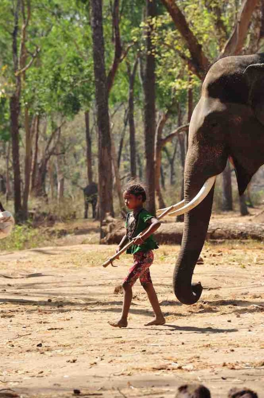 080817_cj_young_girl_with_elephant_elephants_in_the_coffee.jpg