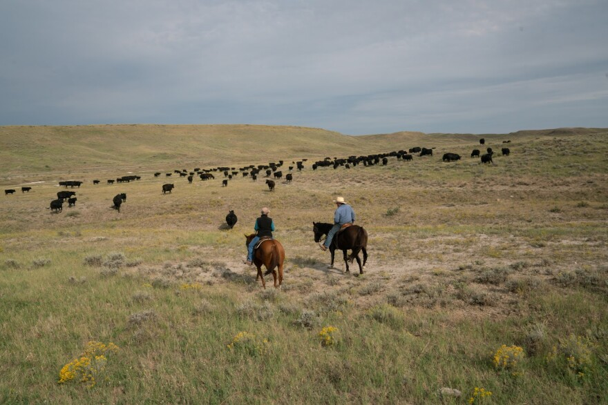 Photo of Conni and Craig French moving cattle.
