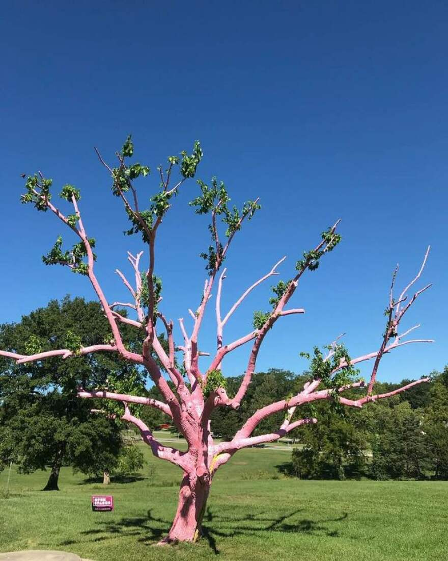 tree_with_leaves.jpg
