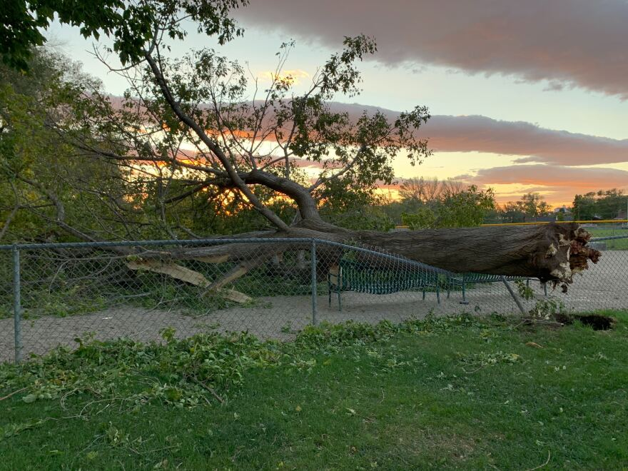 A photo of a fallen tree with a sunset in the background.