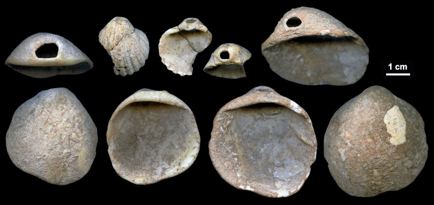 Perforated shells found in sediments in Cueva de los Aviones and date to between 115,000 and 120,000 years.