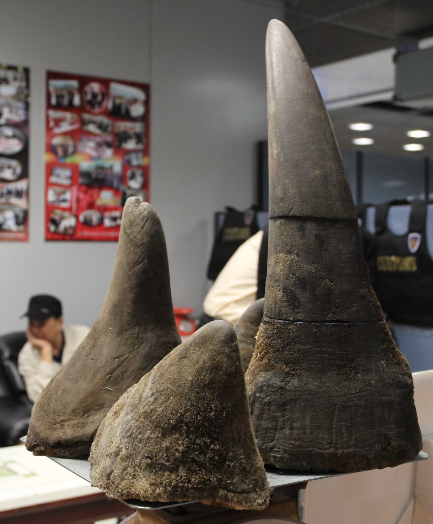 Alleged Vietnamese smuggler Pham Quang Loc, 56, sits behind rhino horns seized at Suvarnabhumi airport in Bangkok on Jan. 6. Rhino horn is seen as a miracle cure-all in Vietnam — an expensive, medically unproved and illegal product that experts say is devastating the global rhino population.