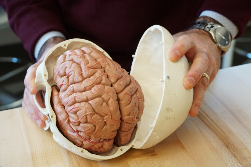 Philip Bayly, a mechanical engineer at Washington University, holds a model of a human brain on January 1, 2020. Bayly is part of a team of engineers and doctors working to better understand brain injuries.