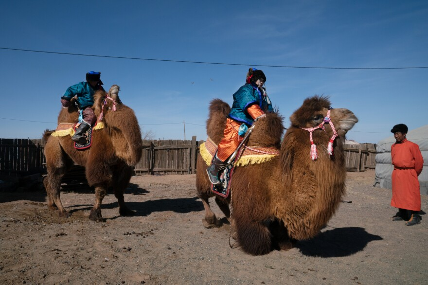 Herders from across Mongolia's Gobi Desert gather for a festival to celebrate the two-humped Bactrian camel. The event is held in early March before the birthing season begins.