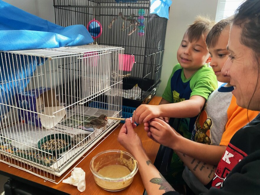 Volunteers with Wild Bird Rehabilitators have been raising non-native baby birds, like this sparrow, in their homes to ease the burden on shelter staff. The facility is now operating with a core group of five staff members.