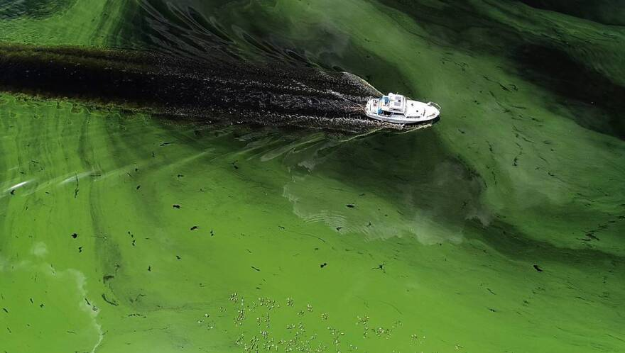 A boat motors through blue green algae in the Caloosahatchee River near LaBelle in 2018.