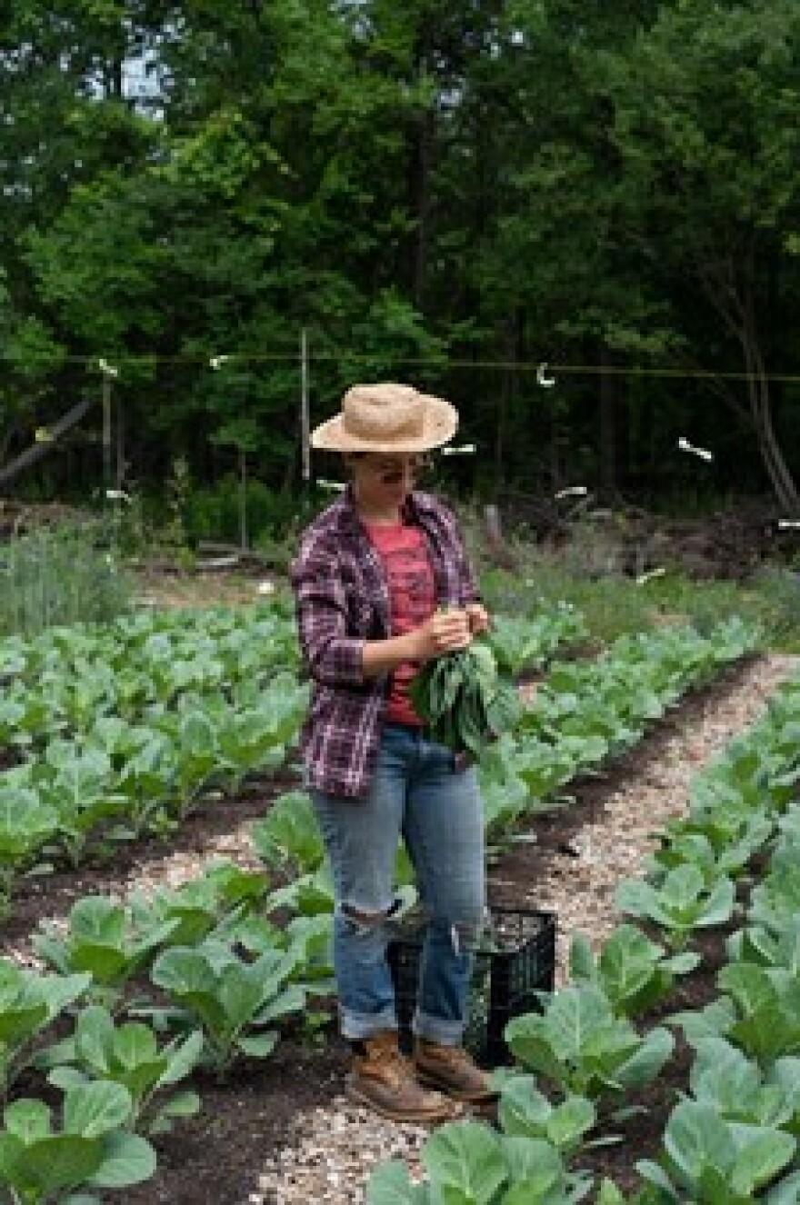 Em Evans of Living City Farms Harvesting Cabbage