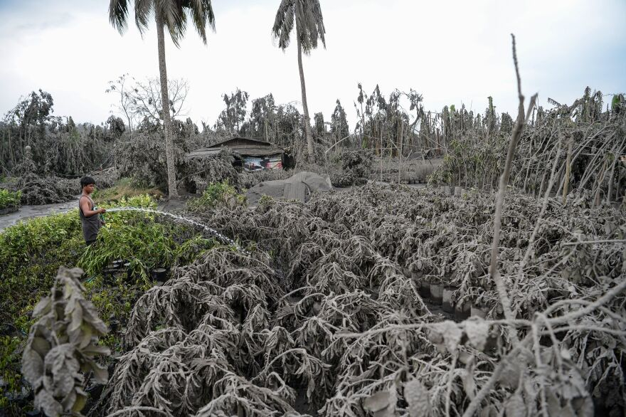 A worker in Talisay town in Batangas Province hoses down plants covered with mud and ash after Taal Volcano erupted. Lava and broad columns of ash illuminated by lightning spewed from the volcano south of the Philippine capital, grounding hundreds of flights.