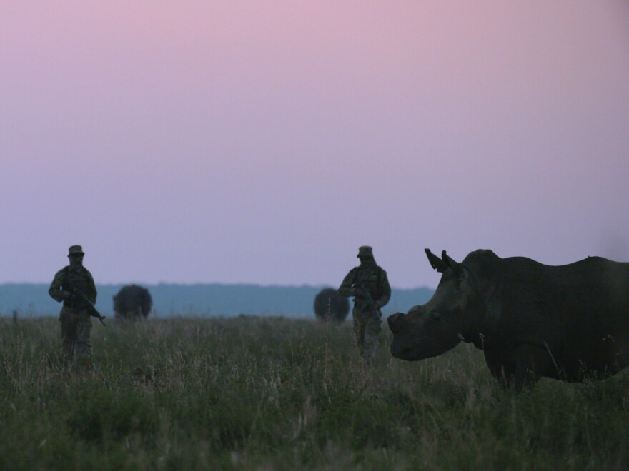 An armed private security team patrols amongst some of John Hume's 1,500 rhinos at Buffalo Dream Ranch, North West Province, South Africa in April 2016. The image is a still from <em>Trophy</em>, directed by Shaul Schwarz and co-directed by Christina Clusiau.