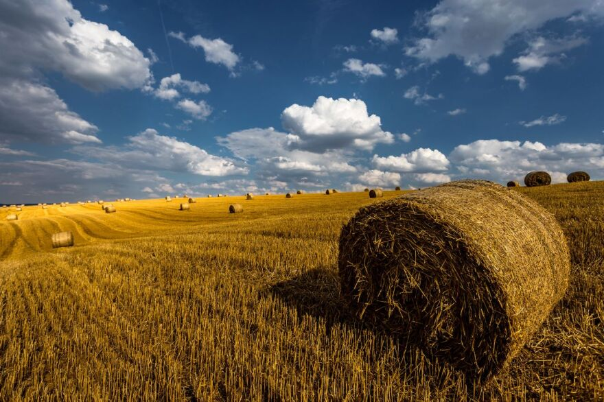 A bale of hay in a freshly cut field in front of blue skies and puffy white clouds.
