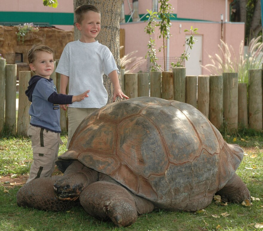 In a file photo provided by Reptile Gardens, children pose next to Methuselah, a 130-year-old 500-pound tortoise. Methuselah died Sunday night, after more than half a century of providing piggyback rides and posing for thousands of pictures.