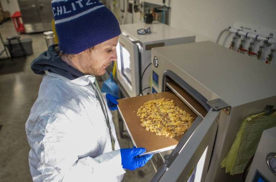 Andrew Massino, an extraction specialist at Wellness Group Pharms, places a batch of cannabis concentrate into a vacuum oven to purge impurities.