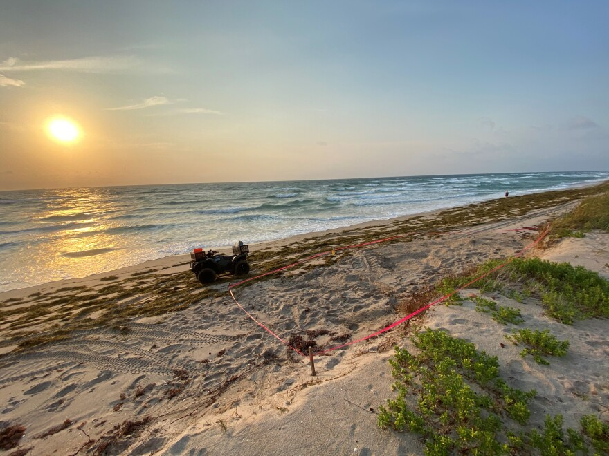 This sea turtle nest was discovered recently by a surveyor for the Broward County Sea Turtle Conservation Program, on the northern portion of Hillsboro Beach.