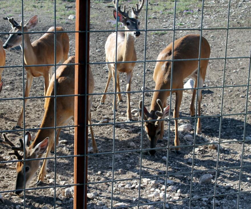 073115_deer.jpg