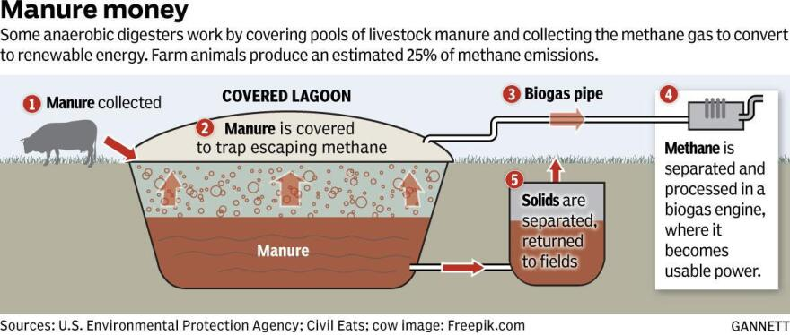 Chart shows the process manure is collected