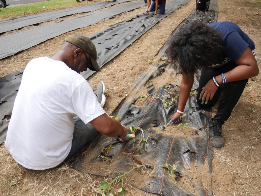 Sylvester Brown and Tamara plant sweet potato seeds in front of Union Avenue Christian Church in June.