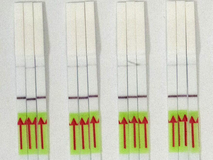 Test strips from SARS-CoV-2 test. A single line means the virus isn't present