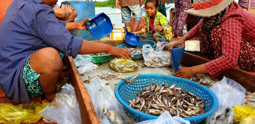 Women separate fish into smaller bags for sale and transport.