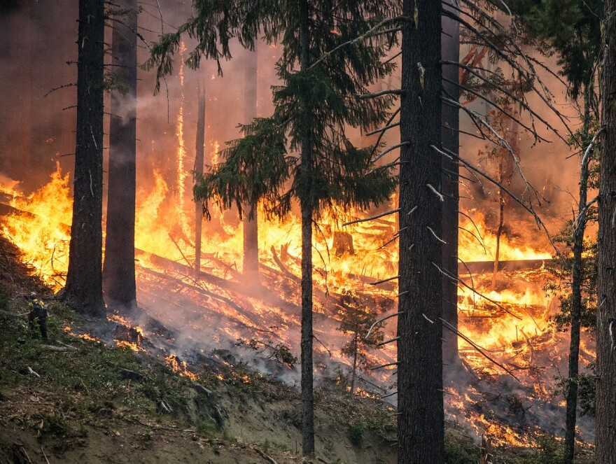 Image of forest on fire