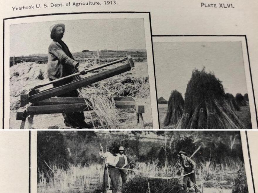 Photos of hemp farming