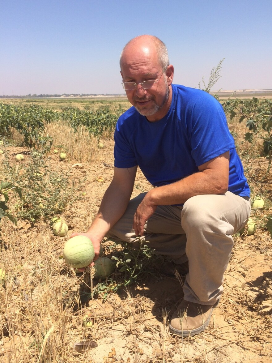 Itay Maoz, who lives on a kibbutz in southern Israel near the Gaza Strip, shows off small and rotting watermelons from a field that was abandoned during the fighting between Israel and Hamas.