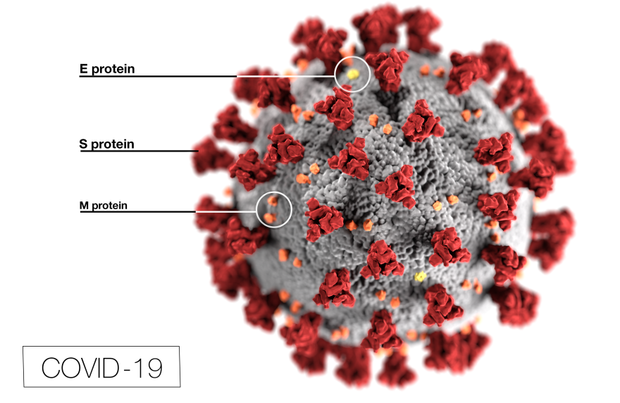 A computer model of the coronavirus, with a spherical shape and red protein prongs.