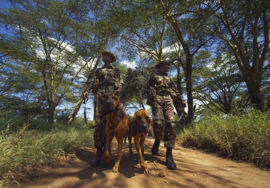 Tipper and Tony are bloodhounds who help protect endangered rhinos and elephants at the LEWA Wildlife Conservancy in Kenya.
