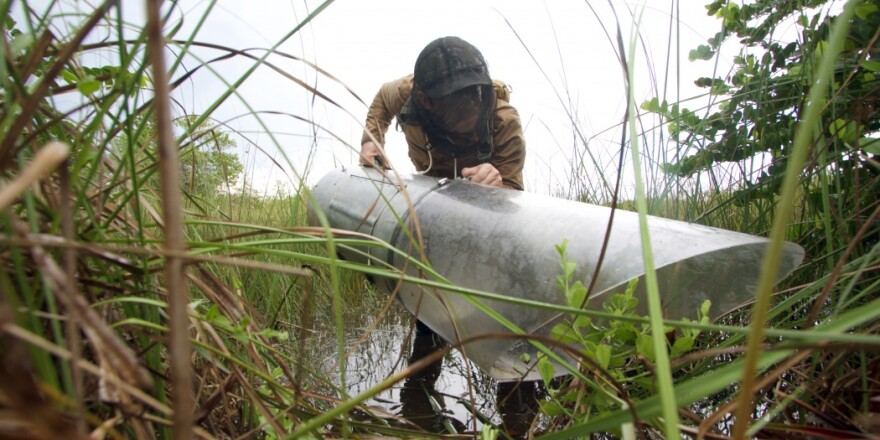 Researcher wields an aspirator in the Everglades