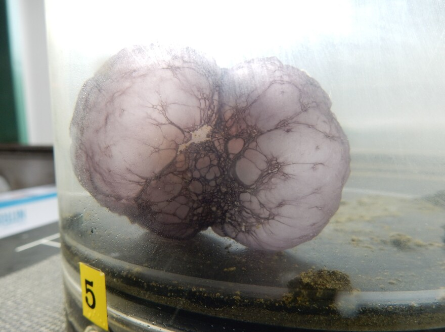 The mysterious blob unfolded once it was on board the exploration vessel.