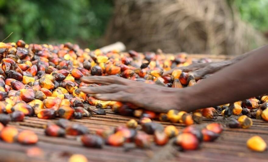 Palm_Oil_Flickr.jpg