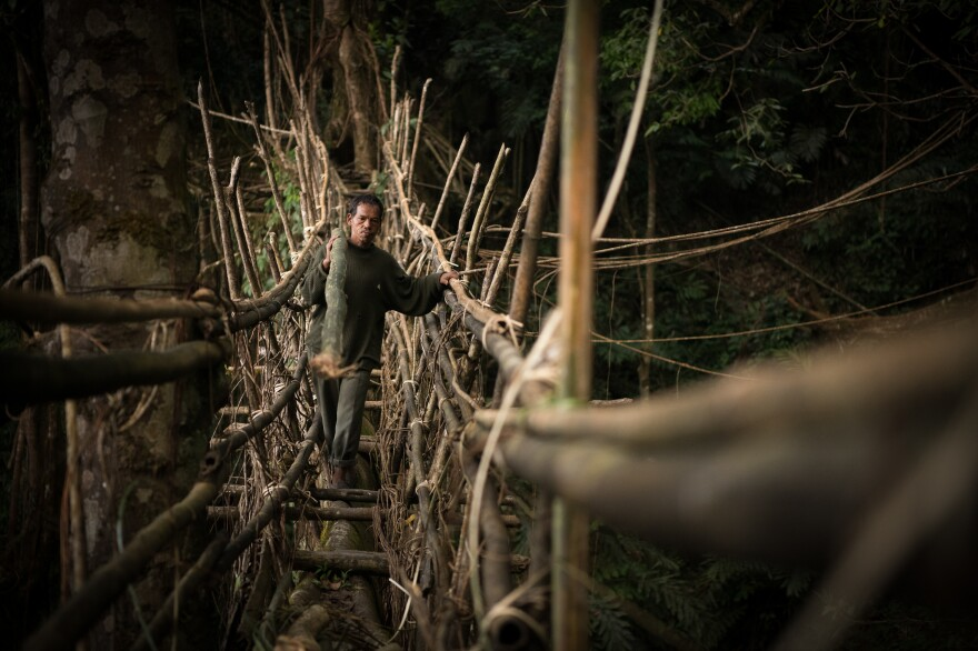 A man carries a bamboo log across a bridge to be used for its maintenance. Bamboo can reinforce young and long bridges, making them sturdy and safe.