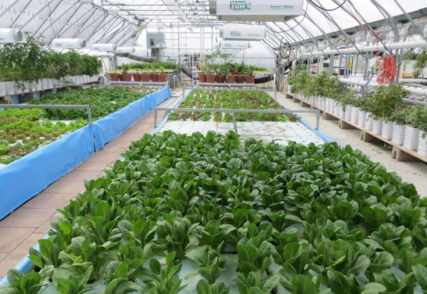 120516_hydroponics__aquaponics.jpg