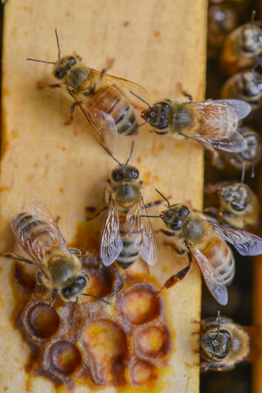 A photo of bees gathering.