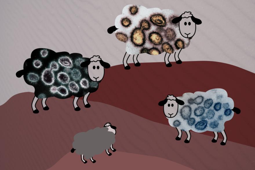 092920_herd-immunity-illustration-khn.png