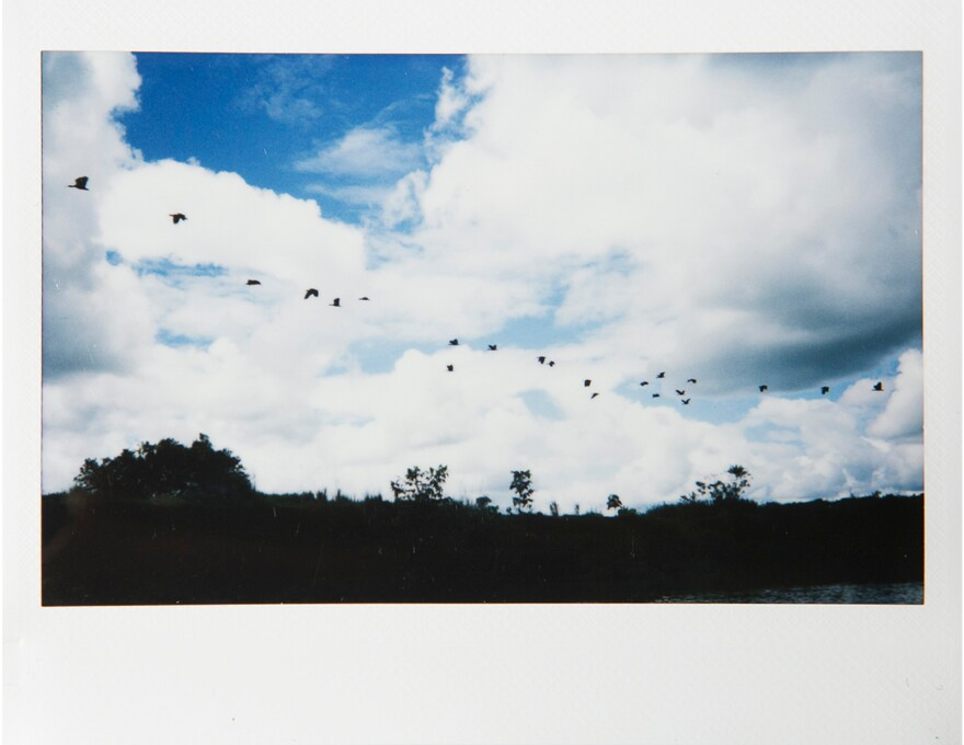 Birds fly over a river in Caquetá, Colombia.