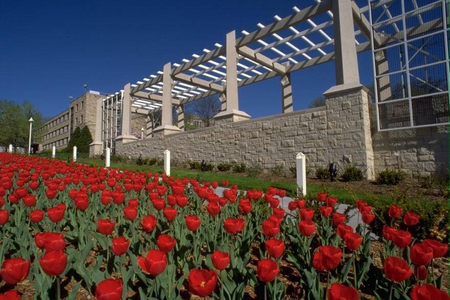 tulipsRockhurstUniversity.jpg