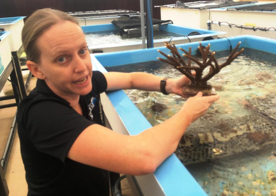 Keri O'Neil checks out staghorn coral