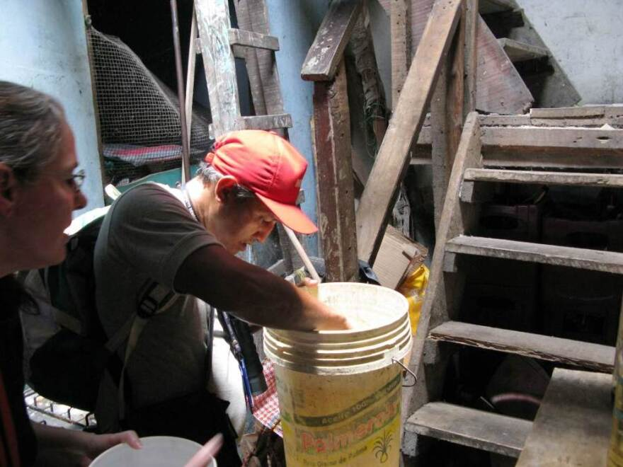 Families in Iquitos often put buckets in their homes to collect rainwater from leaky roofs. The stagnant water is a haven for mosquito larvae.